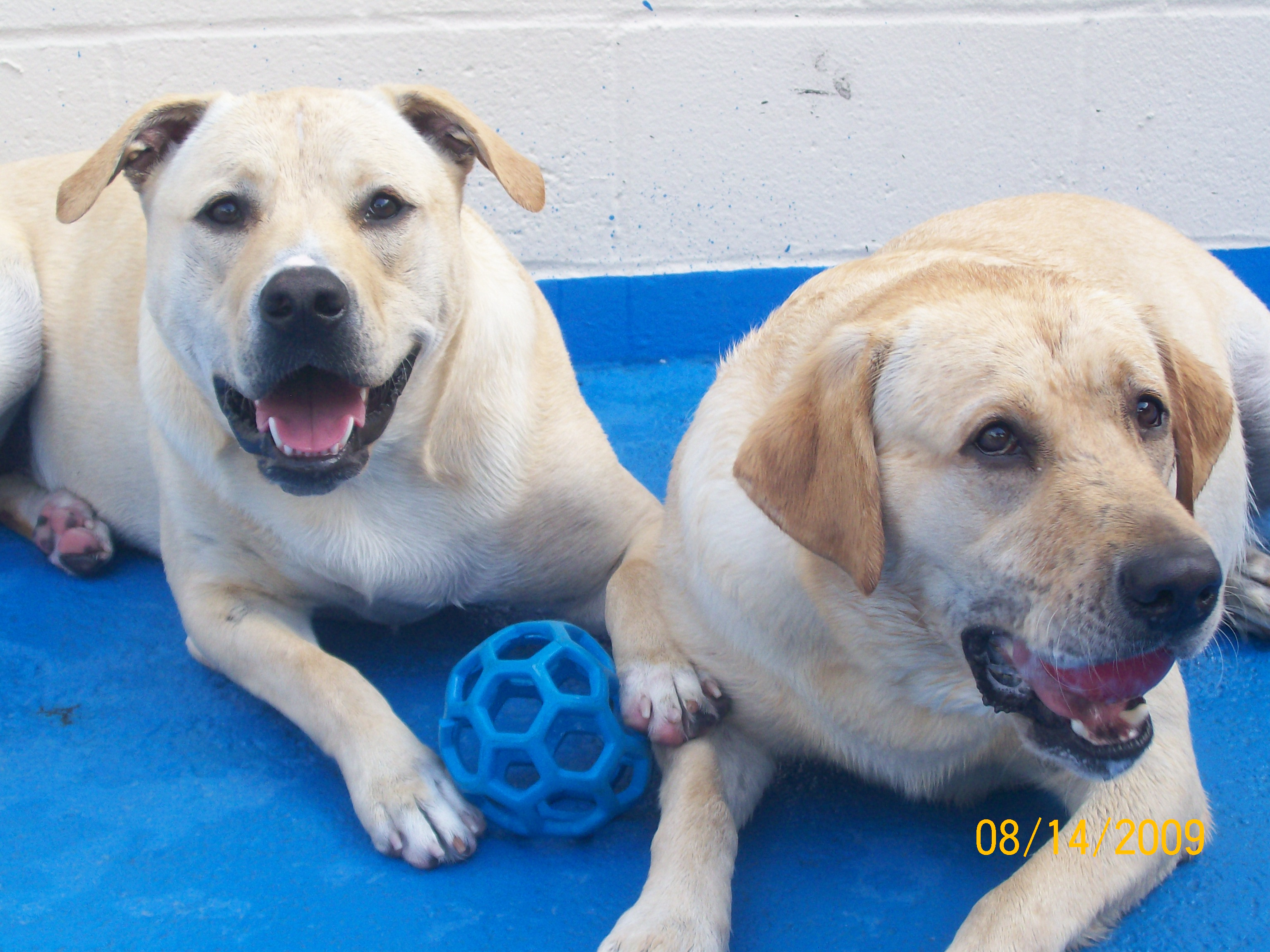 Pet Friendly SoBo Dog Daycare and Spa