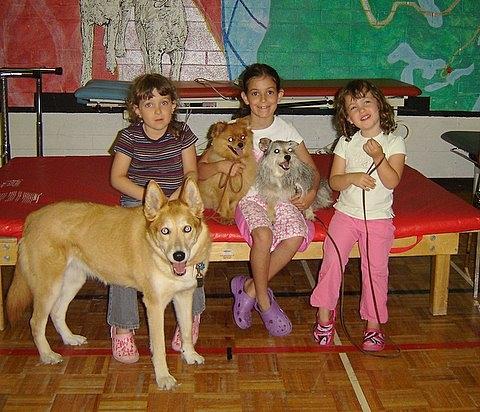 Pet Friendly NYOC Dog Training