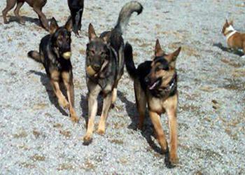 Pet Friendly Doggie Fun & Fitness