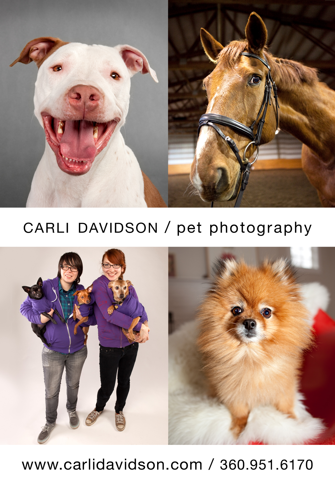Pet Friendly Carli Davidson Pet Photography