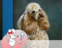 Pet Friendly Cedarwood Kennels Pet Grooming