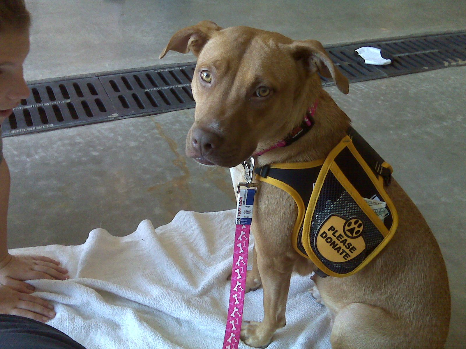 Pet Friendly Bryant Animal Control & Adoption Center