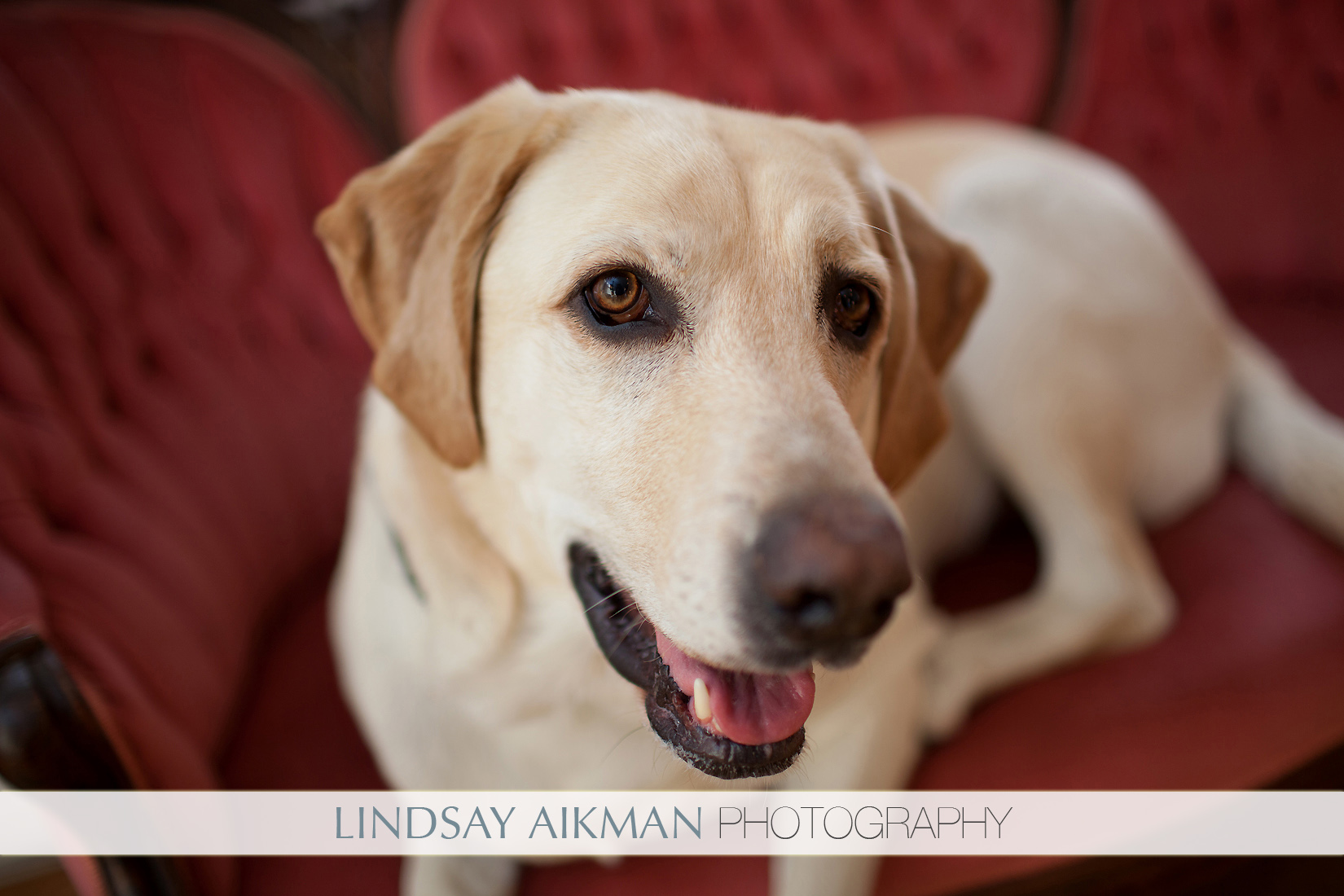 Pet Friendly Lindsay Aikman Photography
