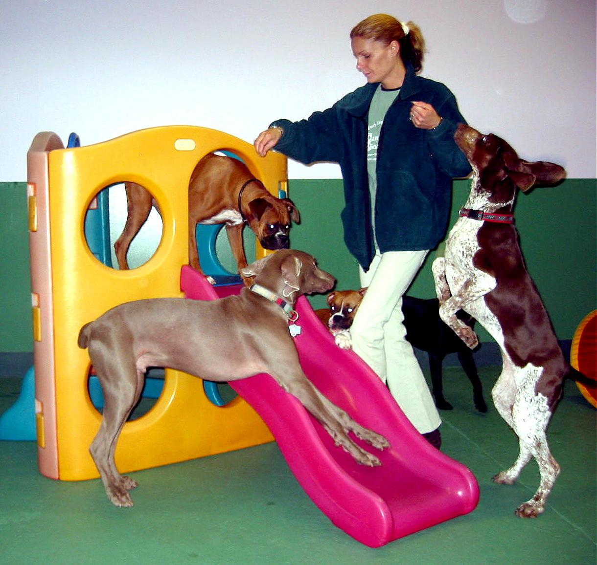 Pet Friendly Canine Kindergarten