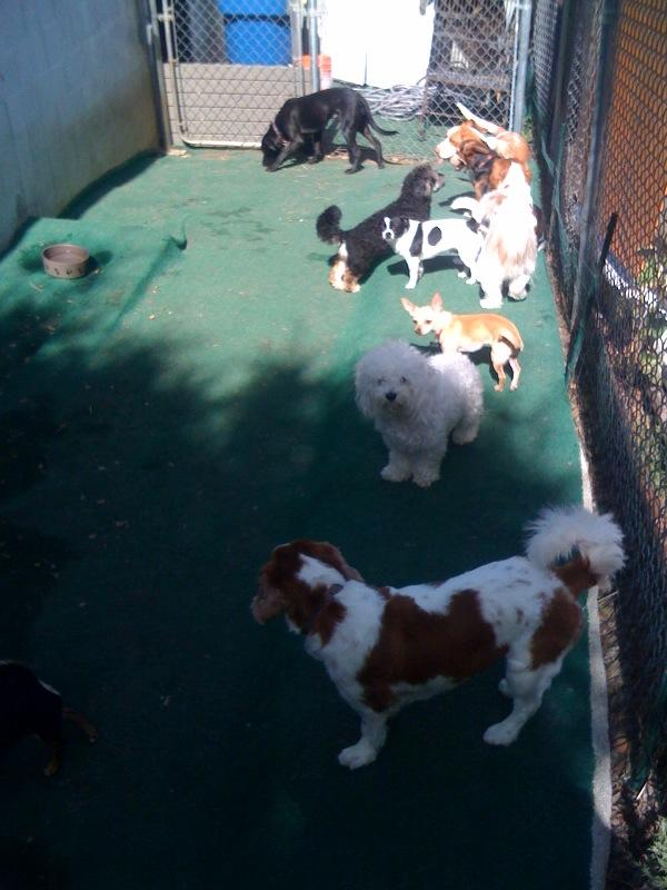 Pet Friendly You Luckie Dog! Doggie Daycare Resort & Spa
