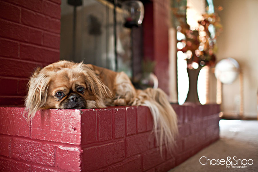 Pet Friendly Chase & Snap Pet Photography