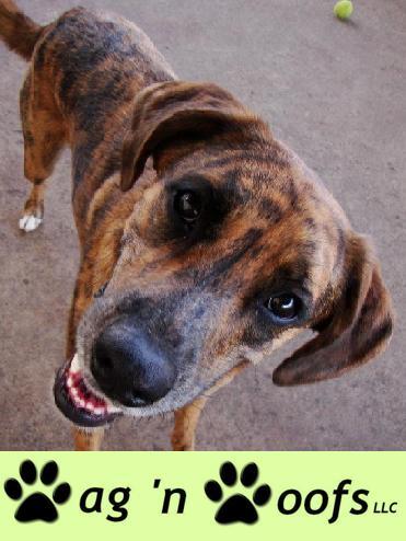 Pet Friendly Wag 'n Woofs LLC