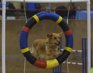 Pet Friendly Companion Dog Training School