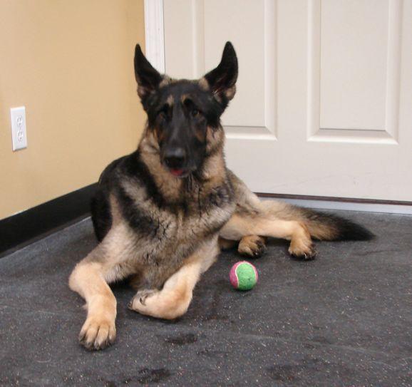 Pet Friendly Sandy Pawz Dog House