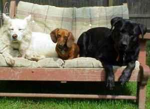 Pet Friendly Bed & Biscuit