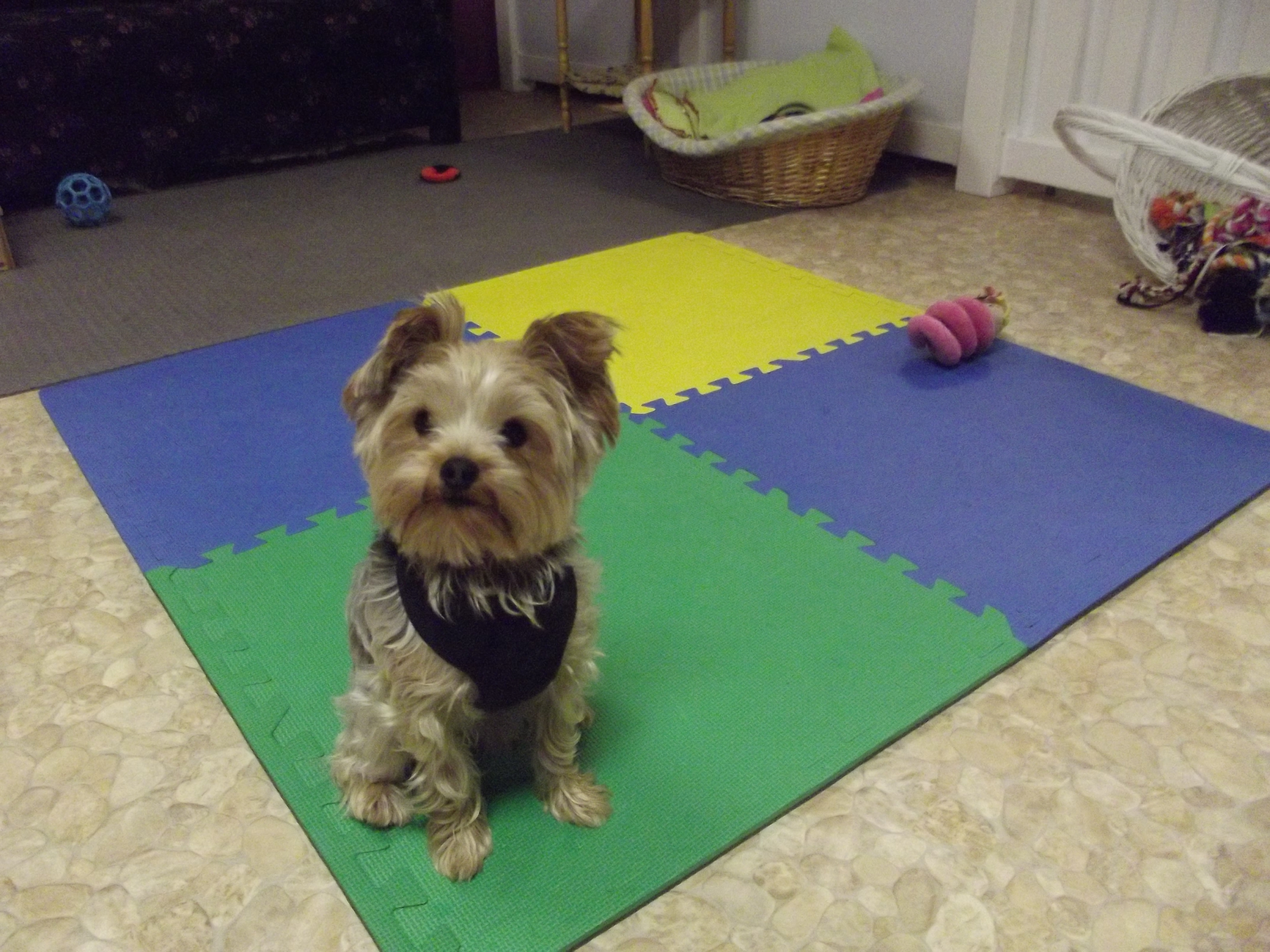 Pet Friendly The Lavish Lair Small Breed Doggy Daycare