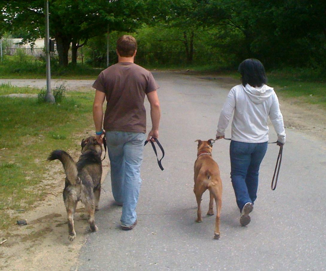 Pet Friendly UnCommon Canine