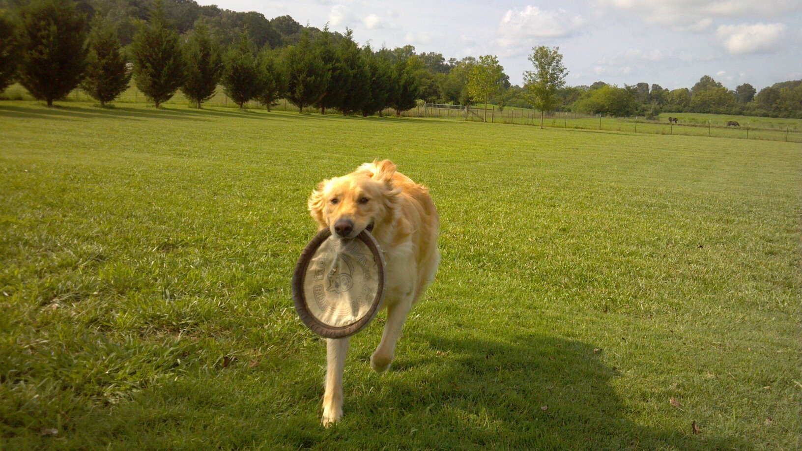Pet Friendly Labby Lane Kennel