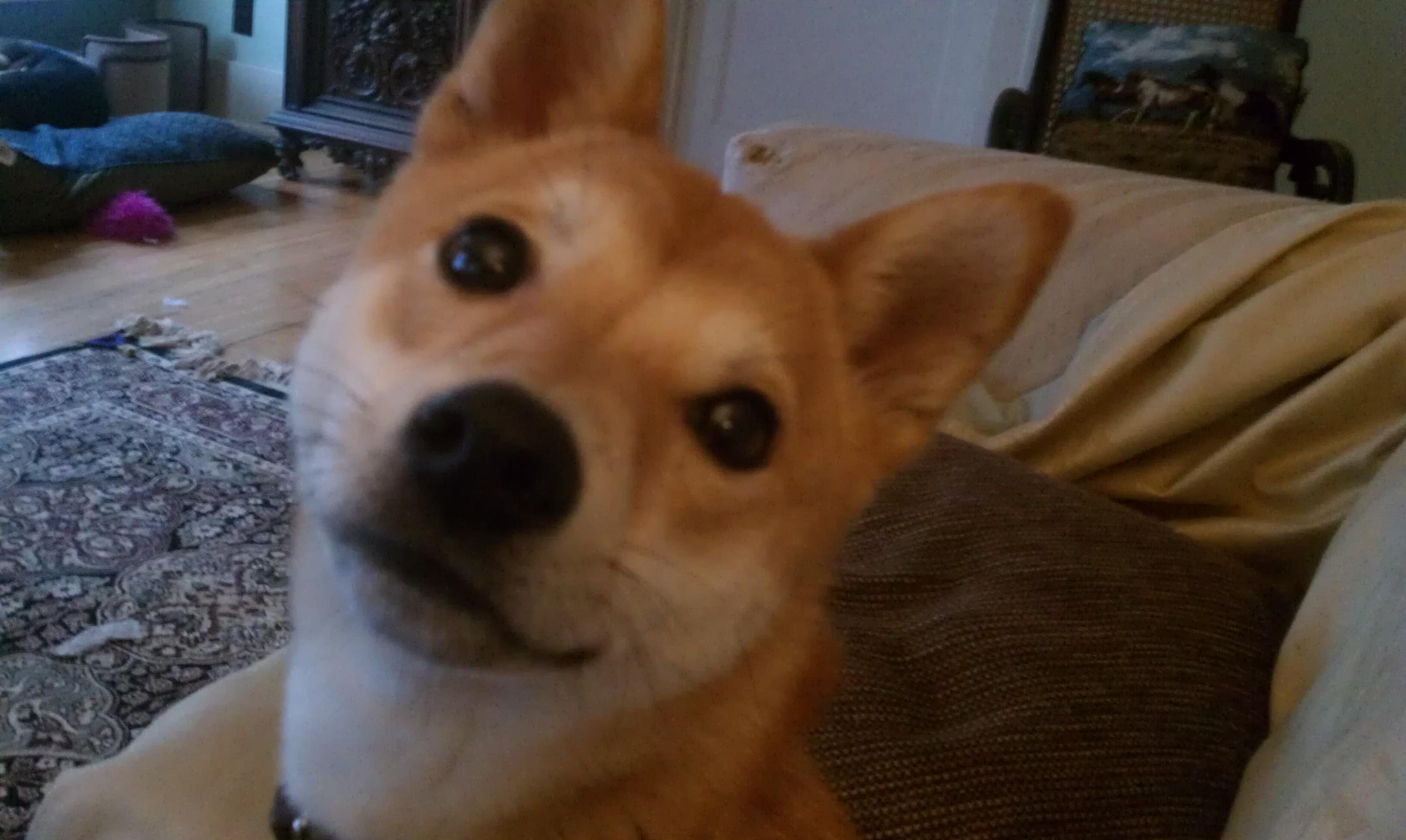 Pet Friendly Translation Dog Training