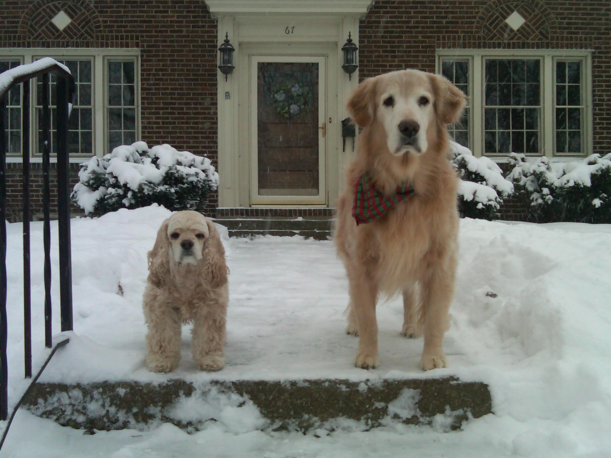 Pet Friendly Home Alone Pets