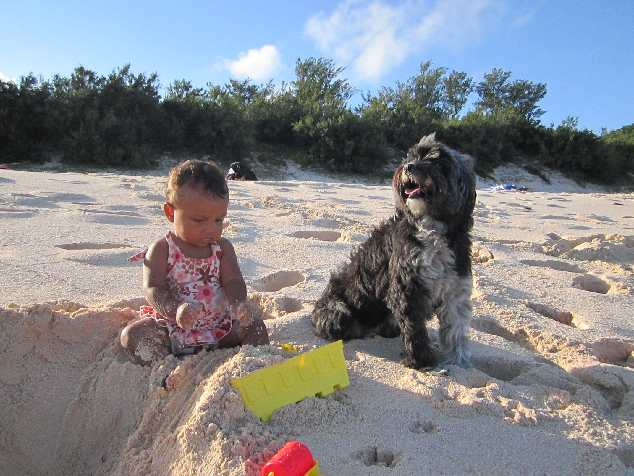 Pet Friendly Bermuda Pet Sitters