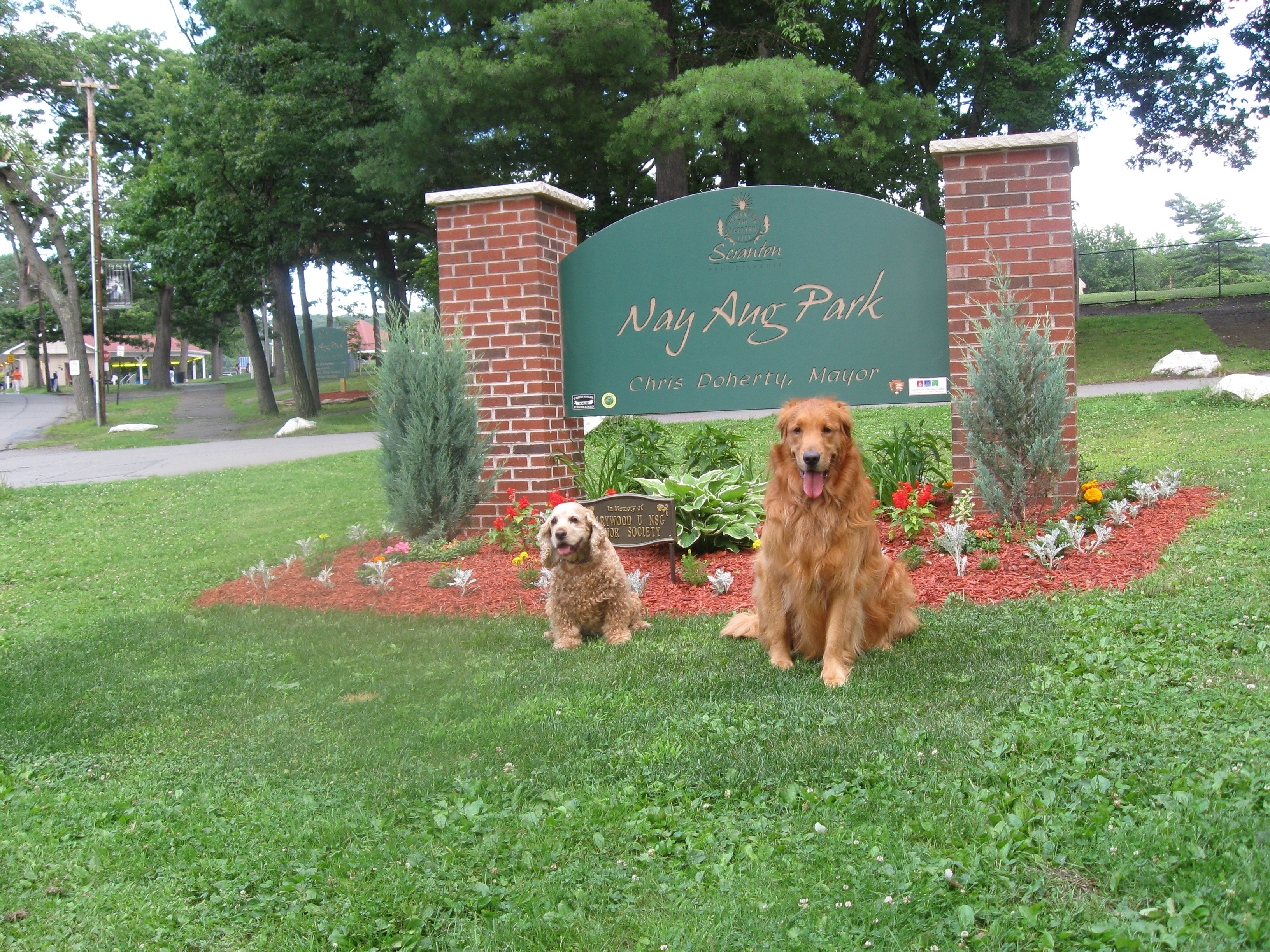 """Pet Friendly Roberta's """"Paws""""itive Love Dog Training"""