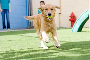 Pet Friendly The Kennel Club LAX