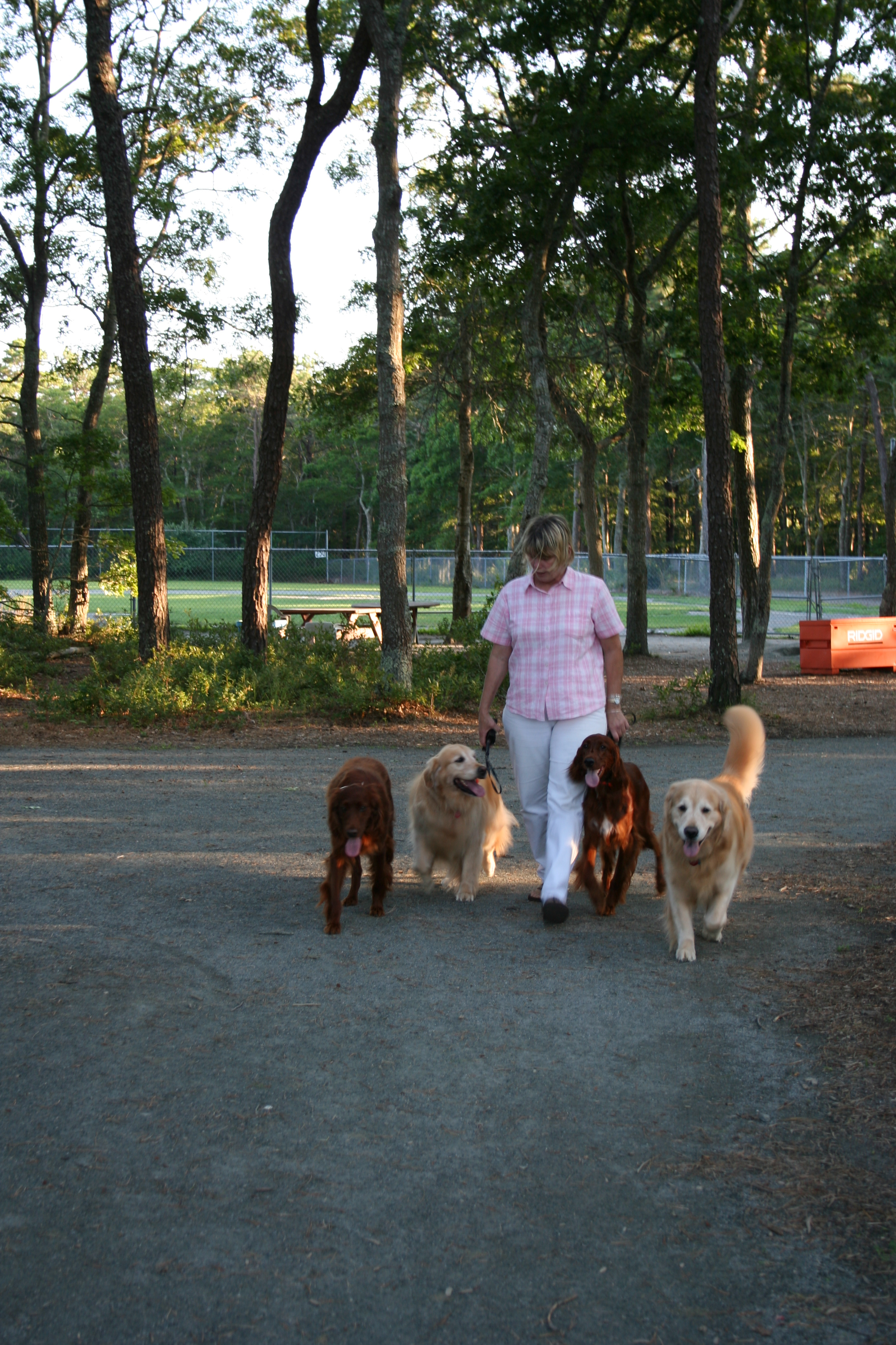 Pet Friendly Just Dogs Training