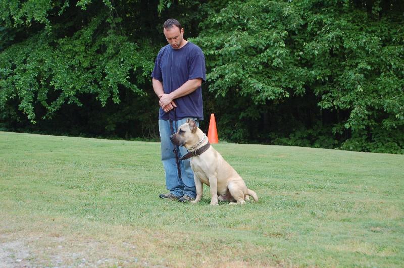 Pet Friendly Sanders Dog Training