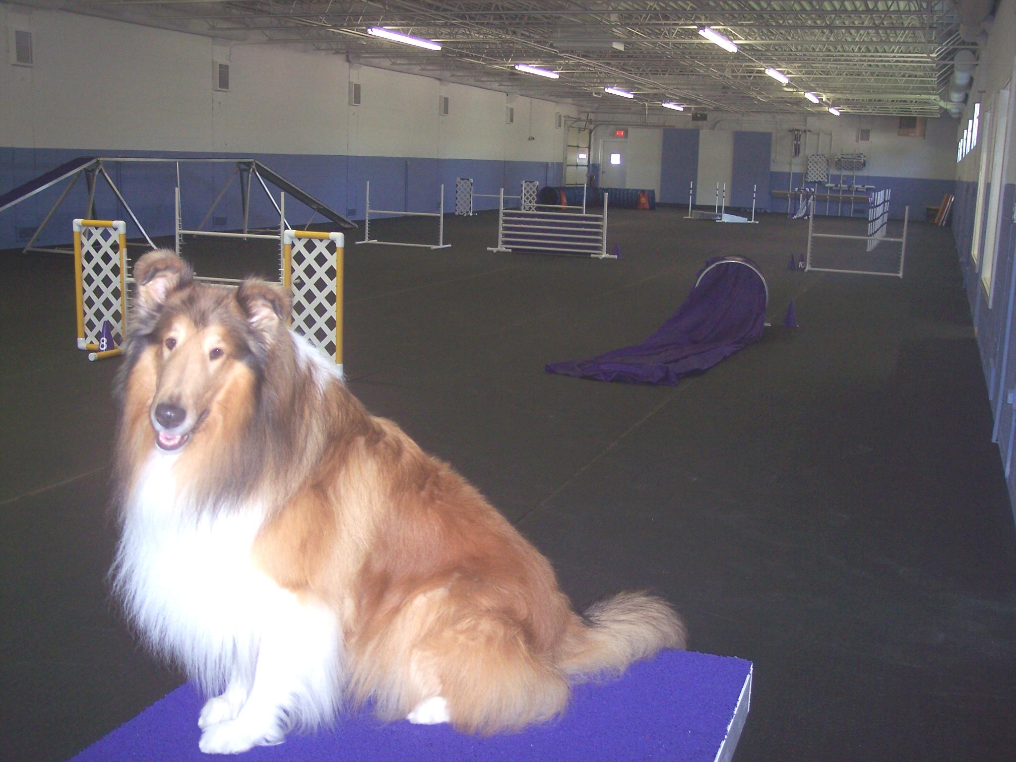 Pet Friendly Digging Dogs Training Center, Inc.