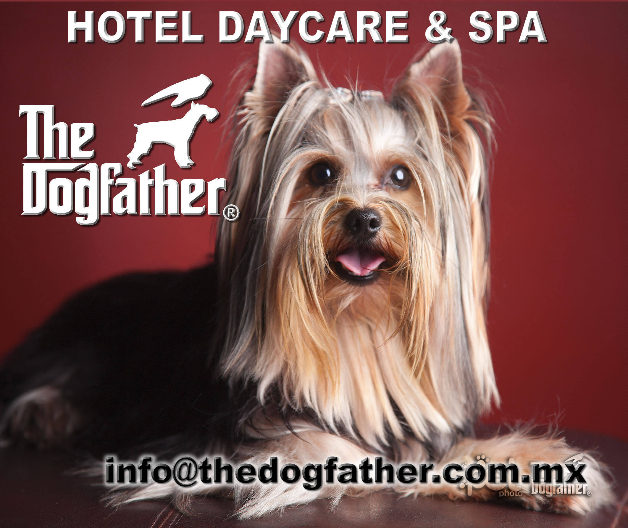 Pet Friendly The Dogfather - Tijuana