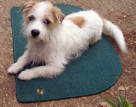 Pet Friendly Pawsitive Effects Dog Training