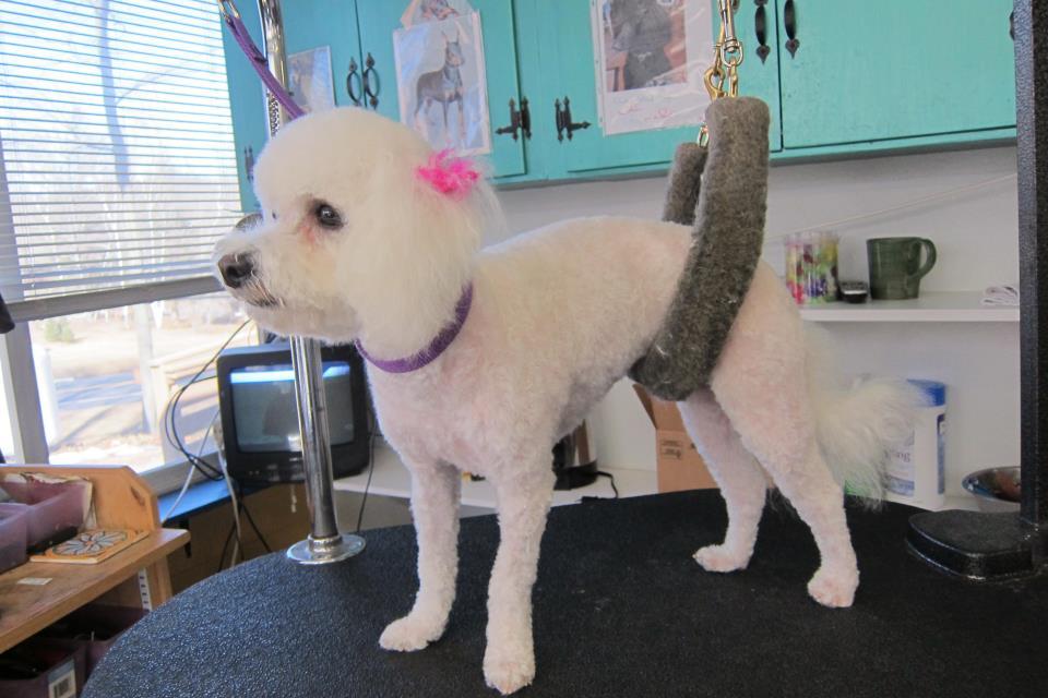 Pet Friendly Annie's K9 Design