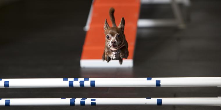 Pet Friendly Zoom Room Dog Training