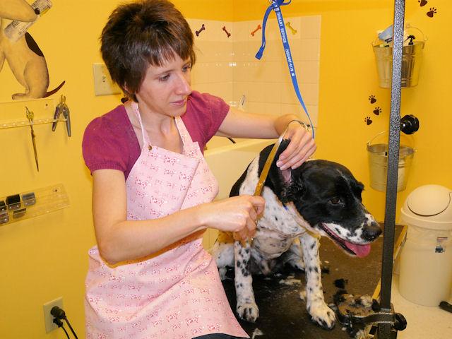 Pet Friendly Dig It Dog Grooming