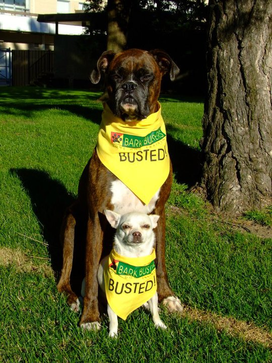 Pet Friendly Bark Busters