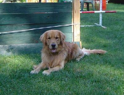 Pet Friendly Trouwe Hond K-9