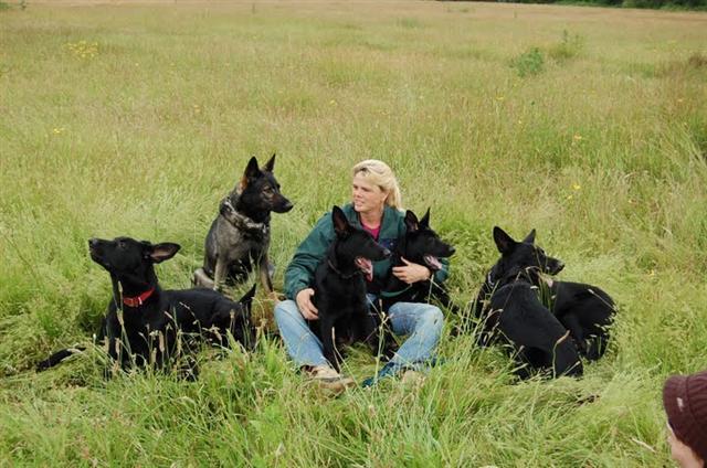 Pet Friendly Good Behavior Dog Training