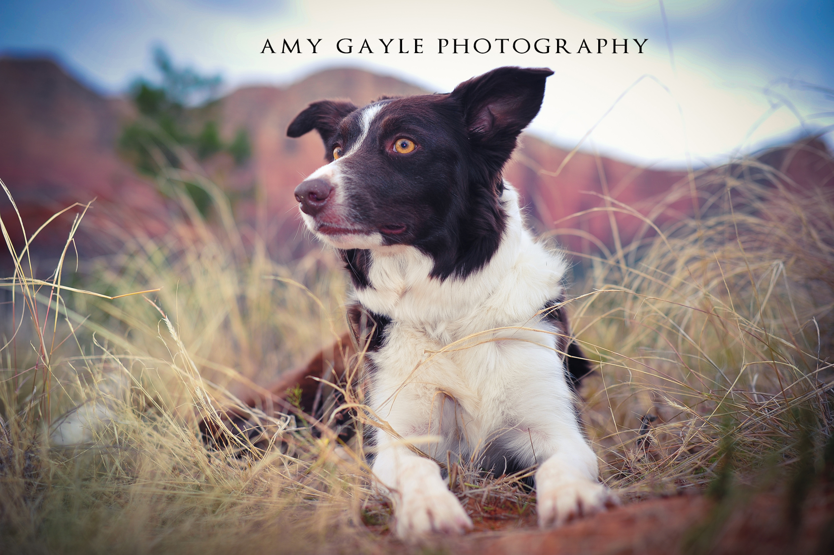 Pet Friendly Amy Gayle Photography