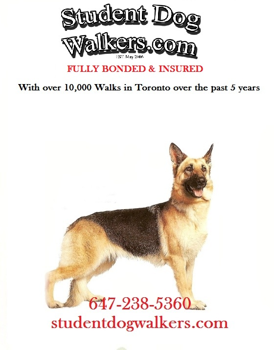 Pet Friendly Student Dog Walkers
