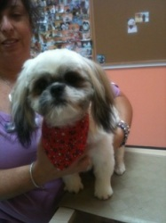 Pet Friendly Pine Valley Shih Tzu Rescue