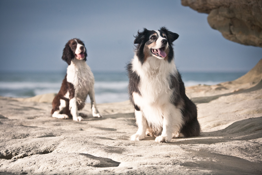 Pet Friendly Beach Dog Photo