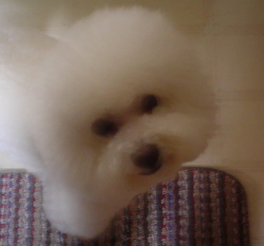 Pet Friendly Pretty Pups Dog Grooming