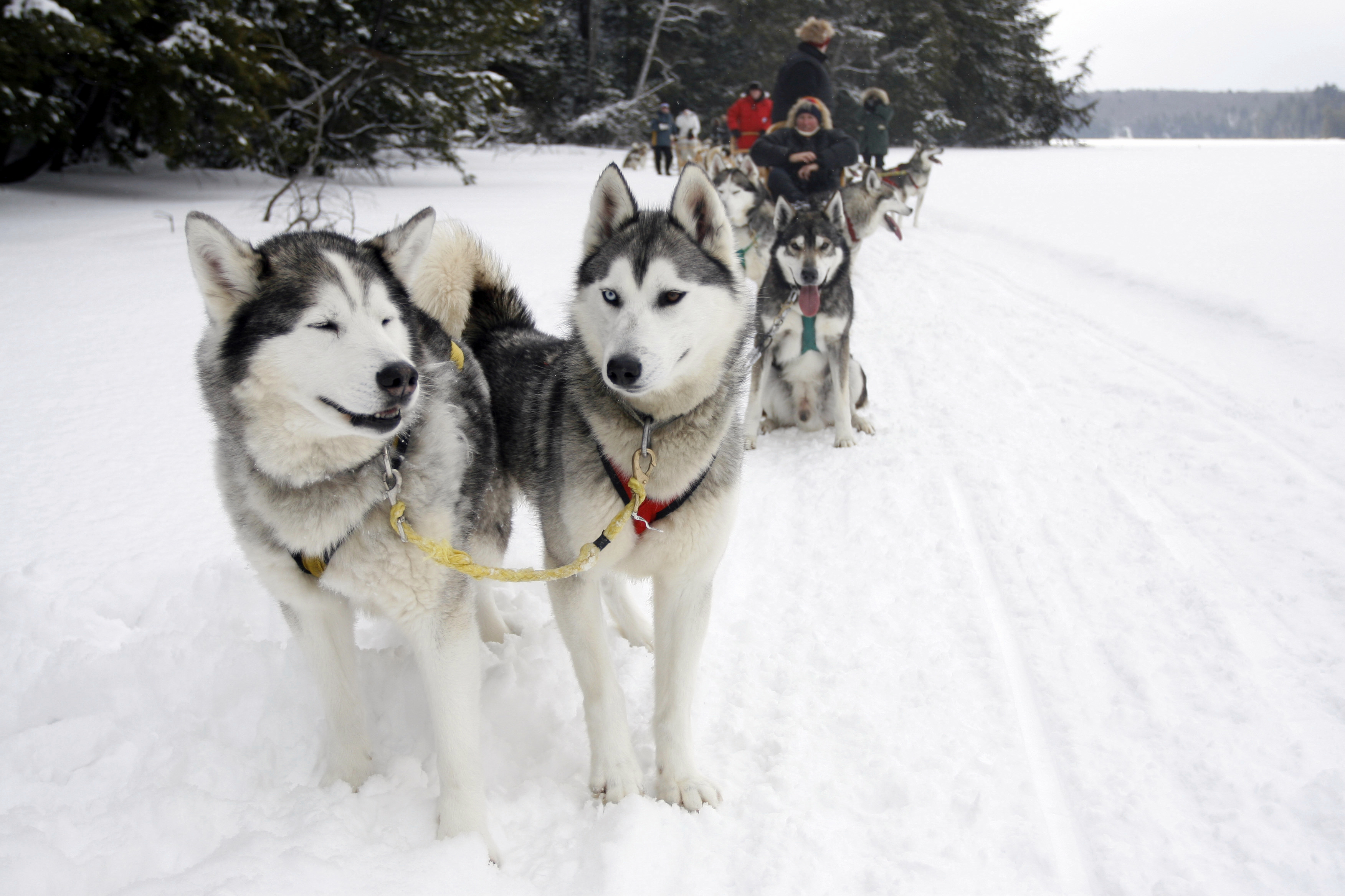 Dog Owner's Guide to Fairbanks, AK