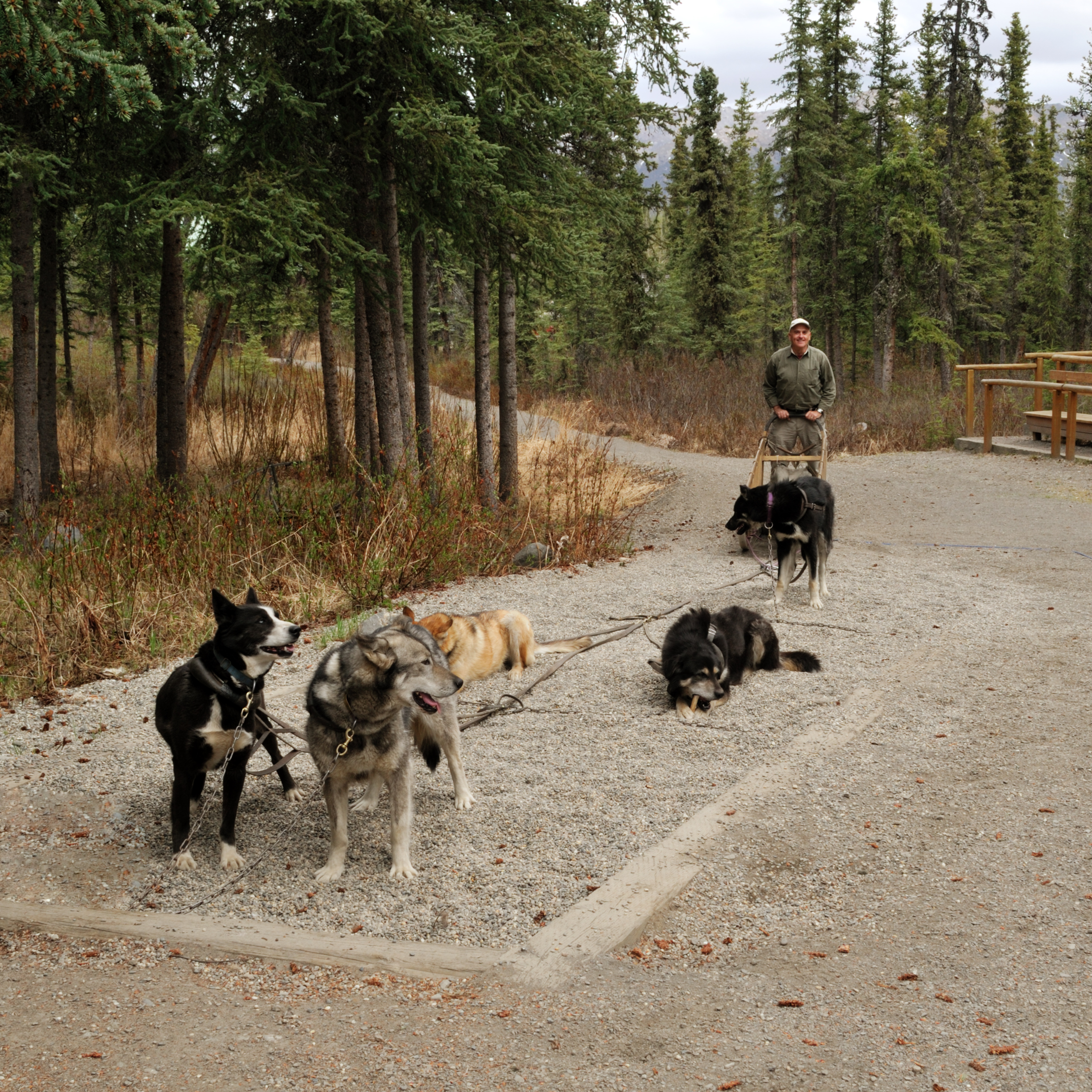 Dog Owner's Guide to Denali National Park, AK