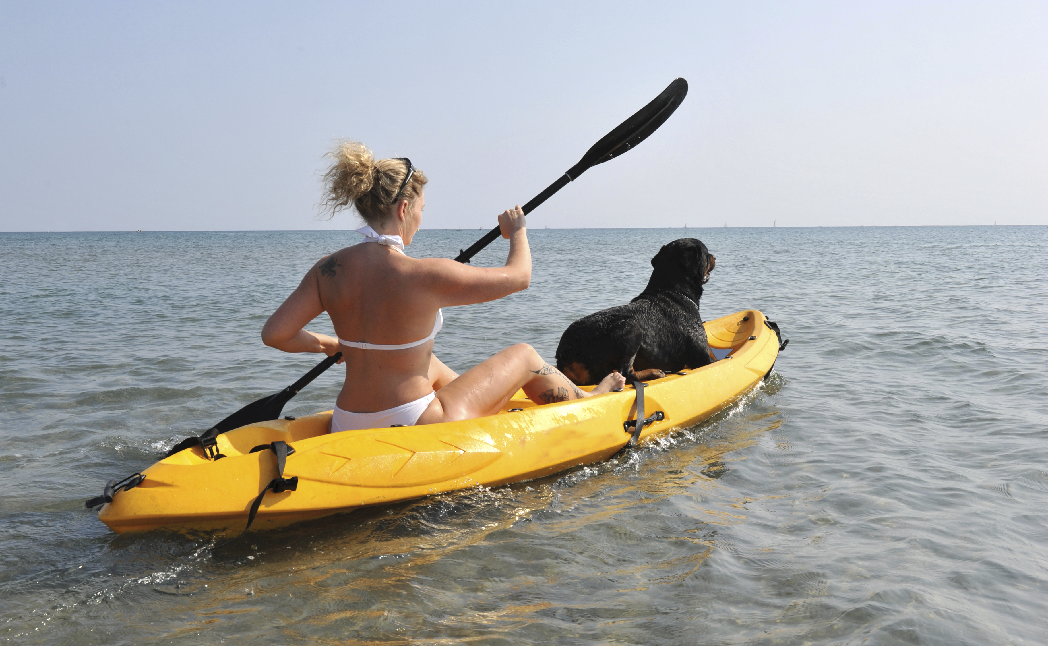 Dog Owner's Guide to  Key West, FL