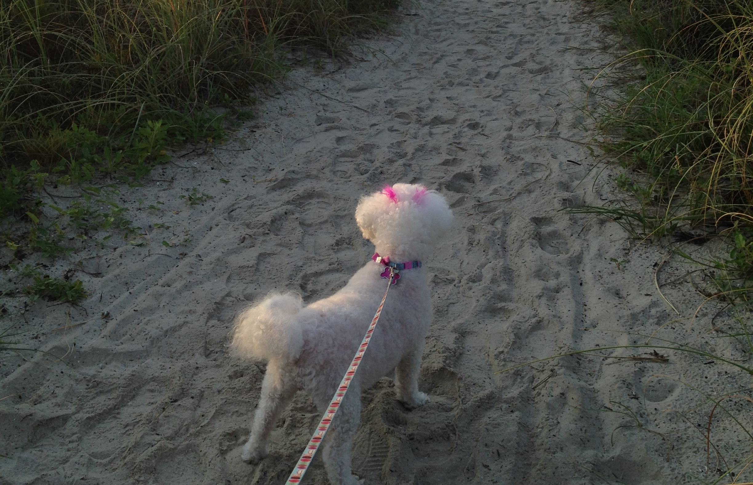 dog friendly hilton head island, sc bring fidodog friendly hilton head island, sc