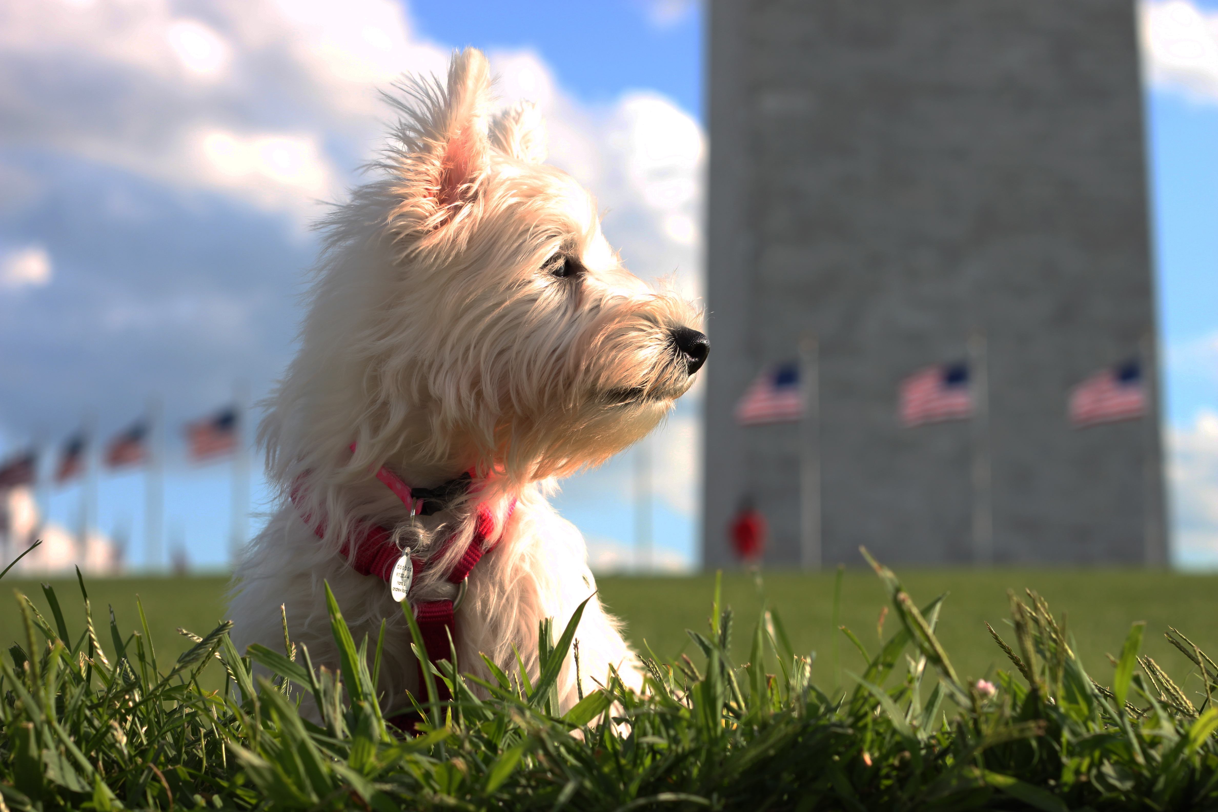 Dog Owner's Guide to  Washington, DC