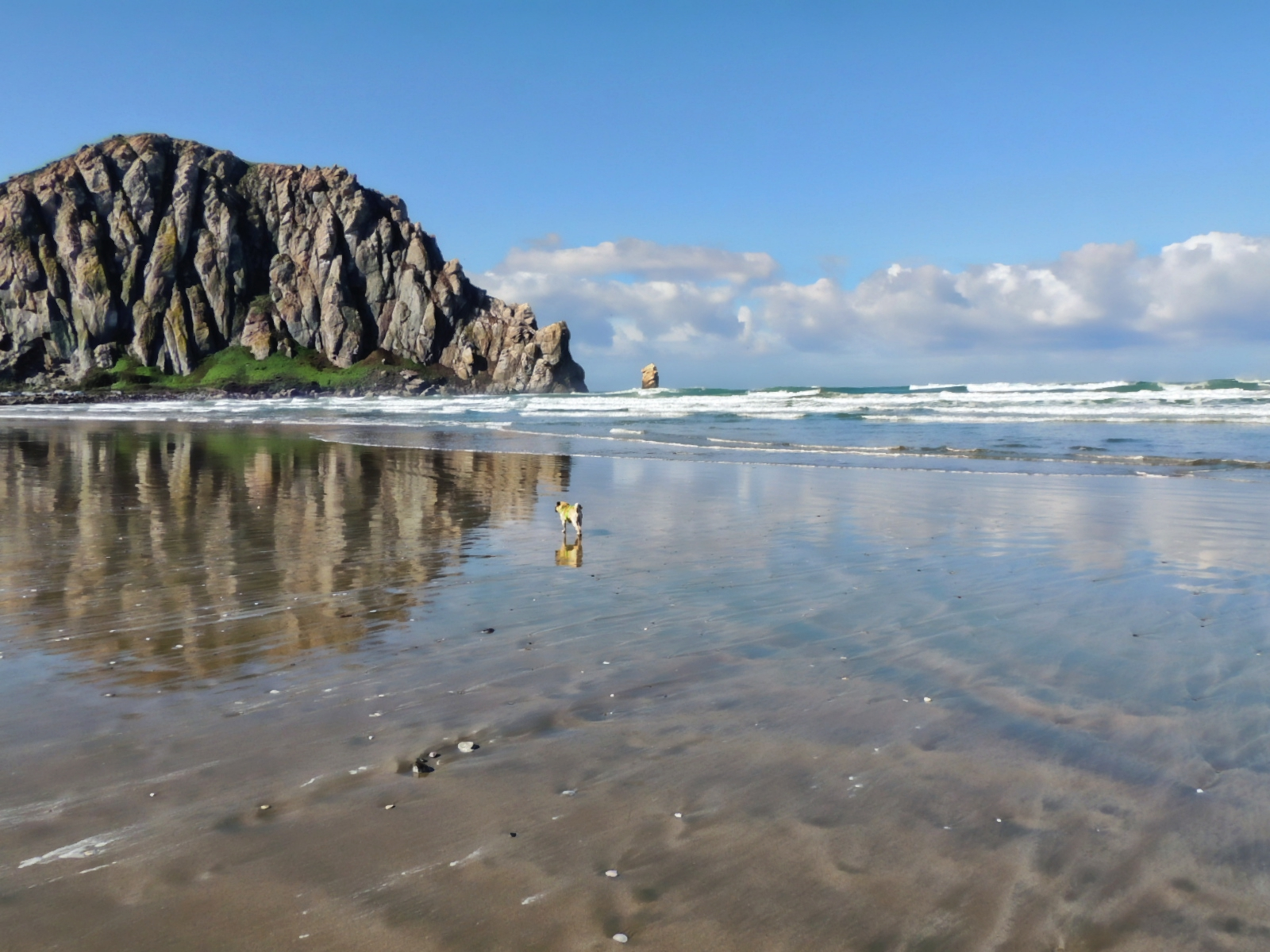 Dog Owner's Guide to Morro Bay, CA