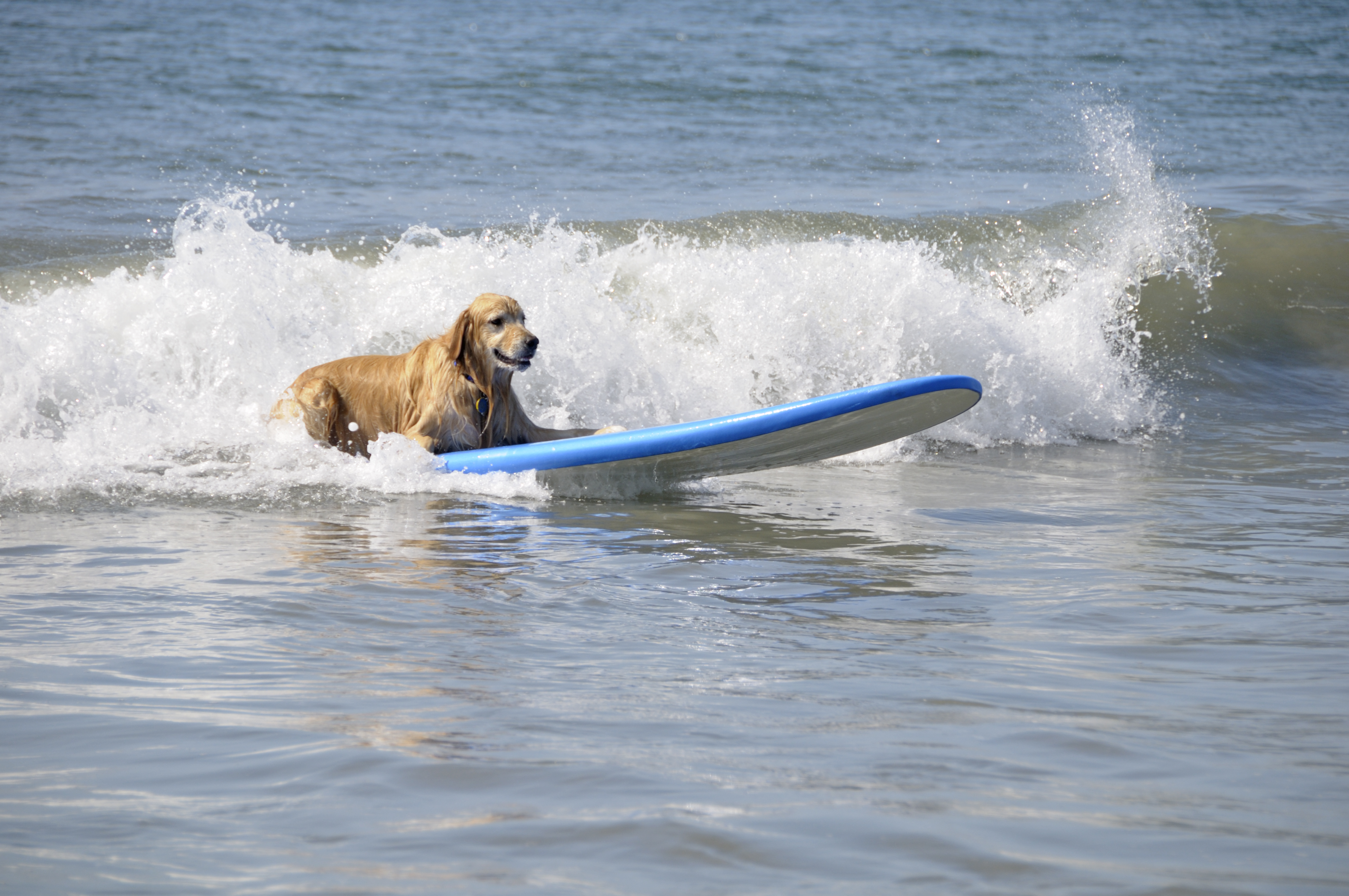 Dog Owner's Guide to Coronado, CA