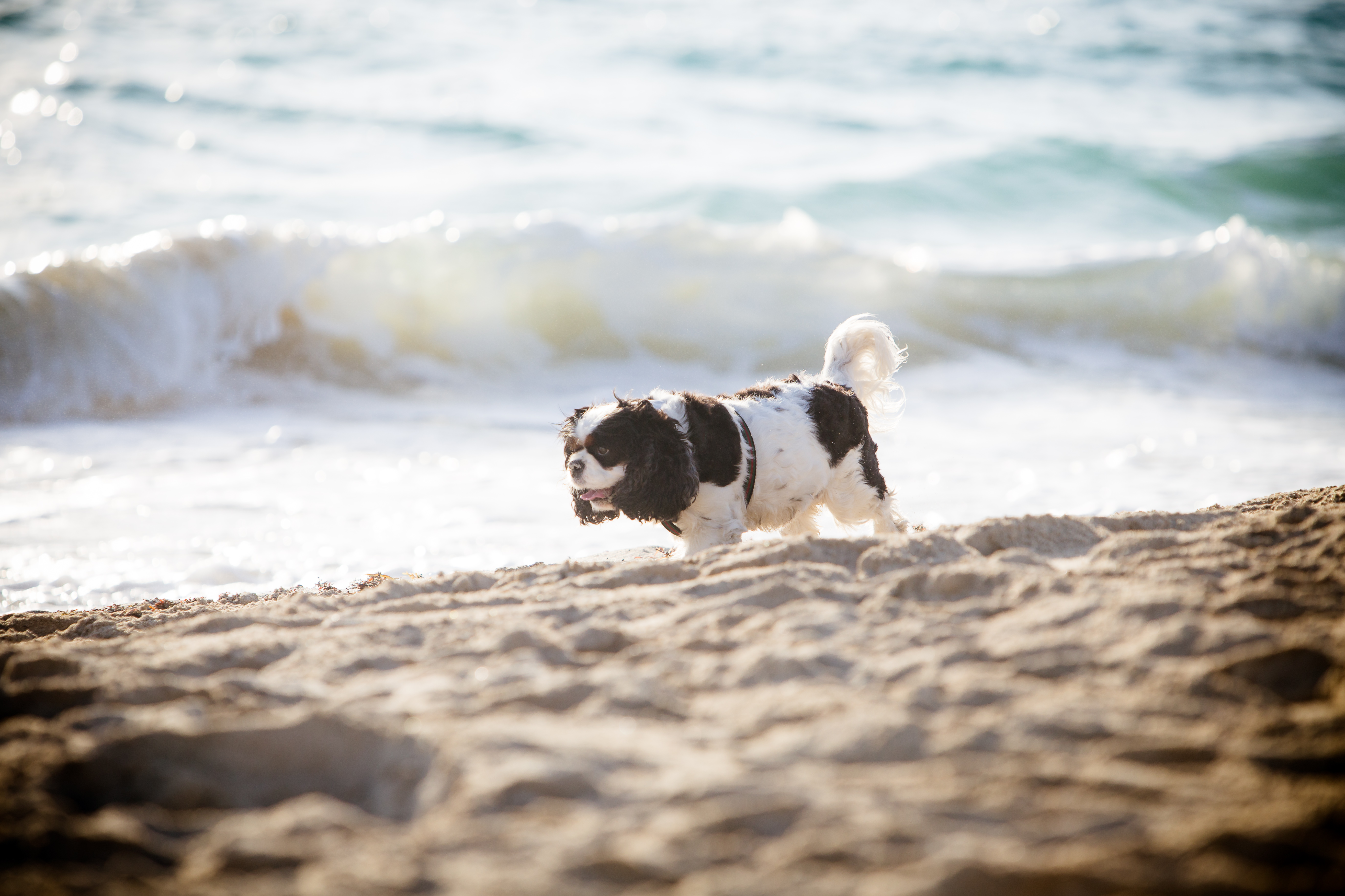 Dog Owner's Guide to  Miami Beach, FL