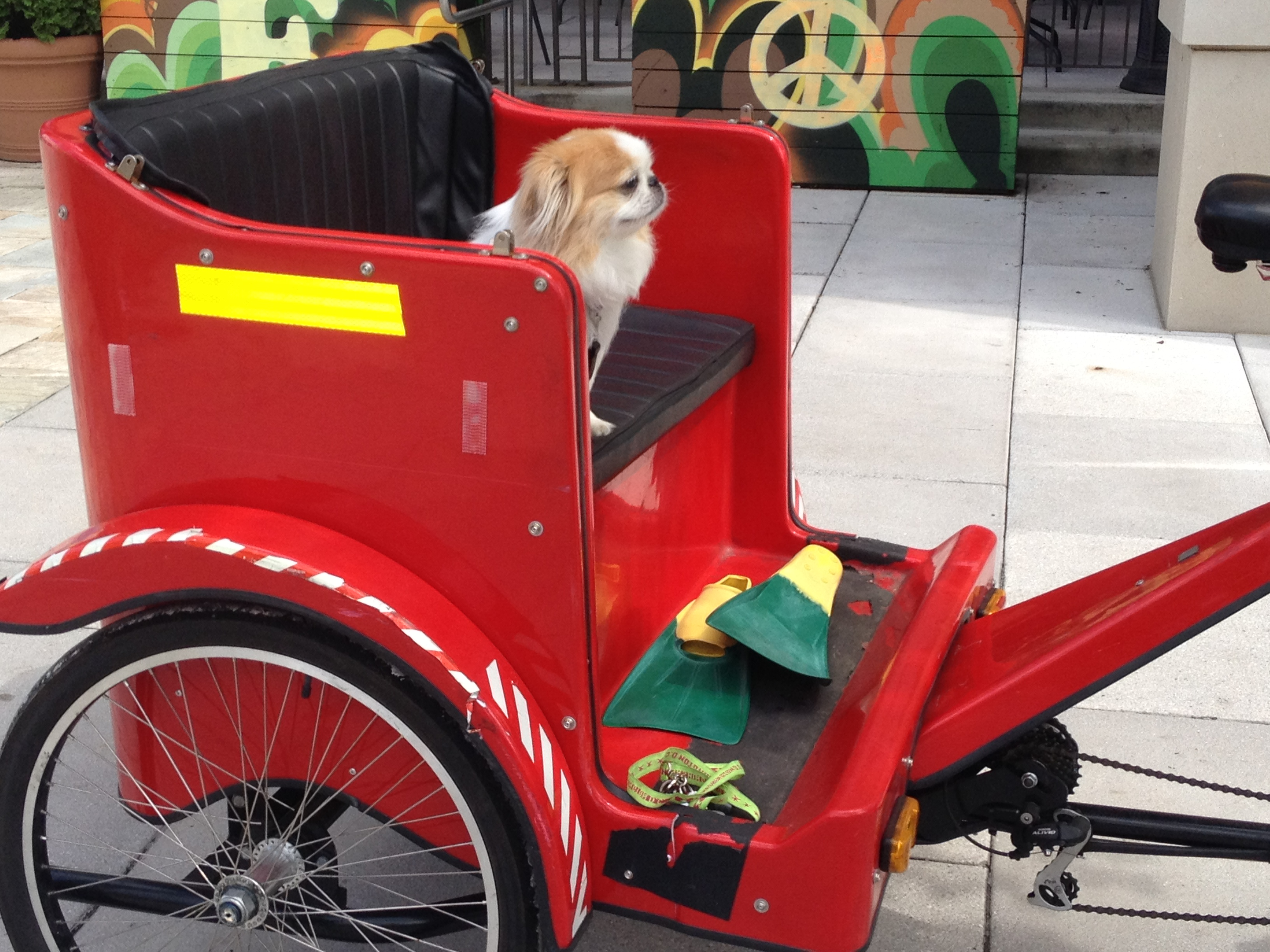Pet Friendly Discover DC Pedicab Tours