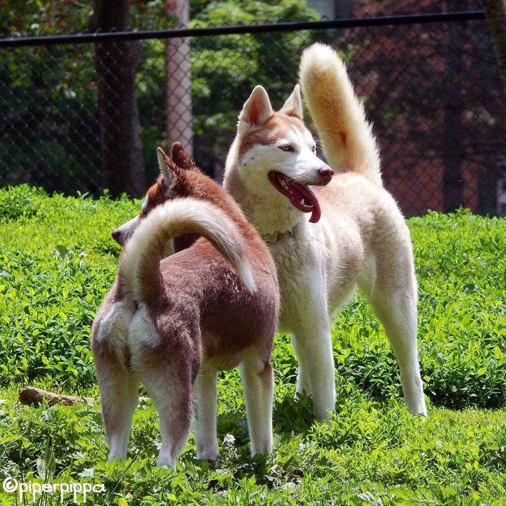 Pet Friendly Dog Park at Godown Park