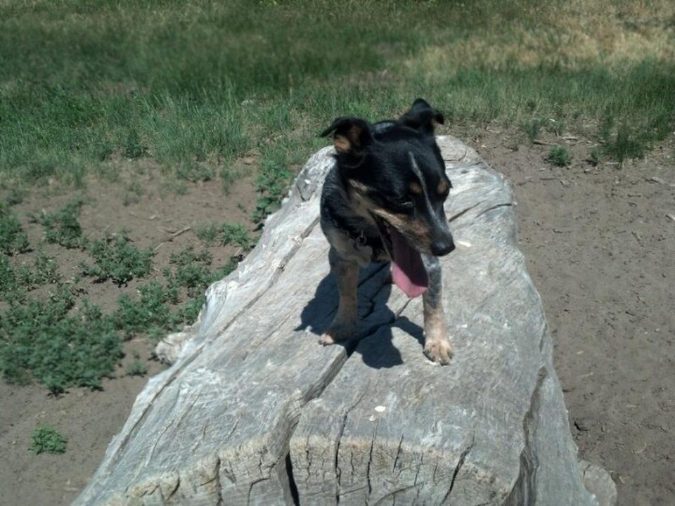 Pet Friendly Rampart Dog Park