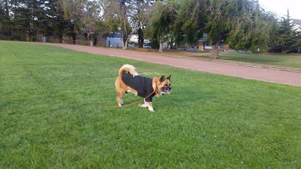 Pet Friendly Sausalito Dog Park